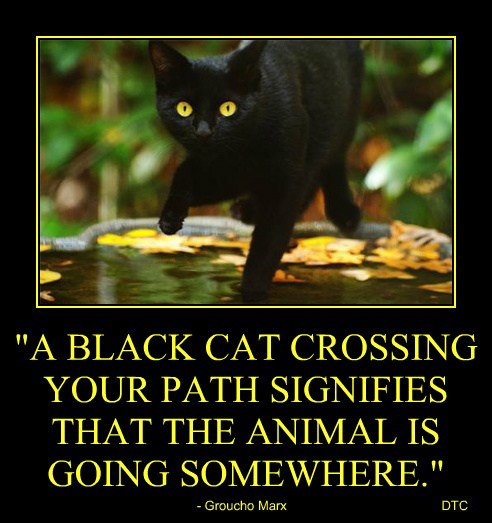 black cat superstition essays Crossing our fingers for good luck or avoiding the path of a black cat some are as old as the written word the power of superstition essays 694 words | 3 pages.