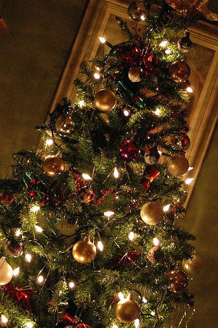 Christmas Trees | Dauson Stimpson-Gagnon