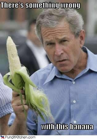 corn bush