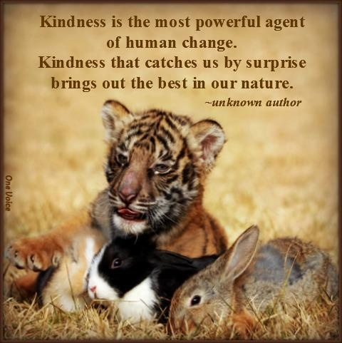 "essays on kindness to animals Short paragraph/speech on ""kindness to animals"" complete paragraph or  speech for class 10, class 12 and graduation and other classes."